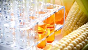 Vietnam- receiving the application for the request of investigation of the application of anti-dumping measures with products of High-fructose corn syrup (HFCS) originated from China and South Korea