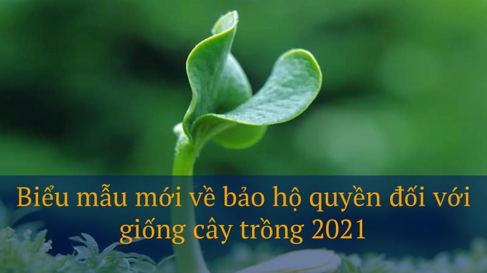 Biểu mẫu bảo hộ quyền đối với giống cây trồng mới 2021